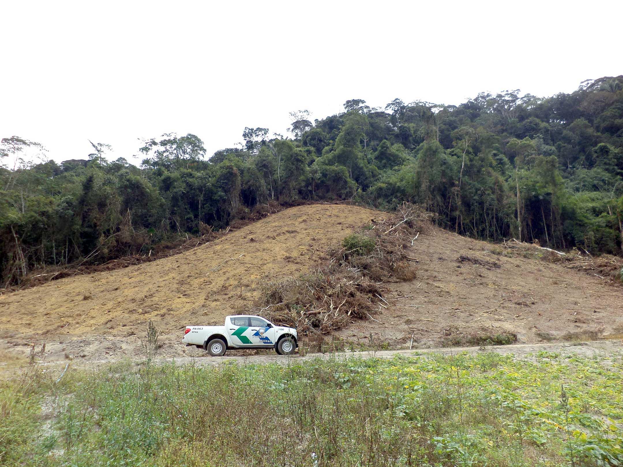 Ataque à natureza: Quase cinco mil metros quadrados de Mata ...