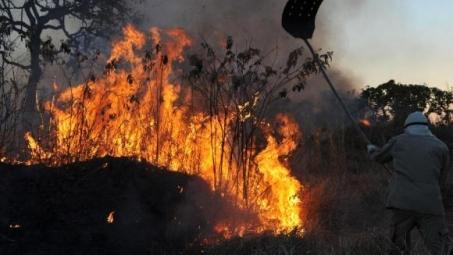 Tempo seco e ação humana resultam em 333 incêndios no Espírito Santo, informa Bombeiros