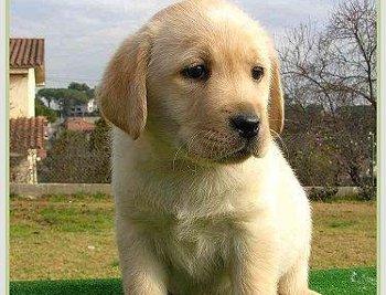 Locais para passear com cachorros será tema de audiência pública na terça-feira, em Vitória