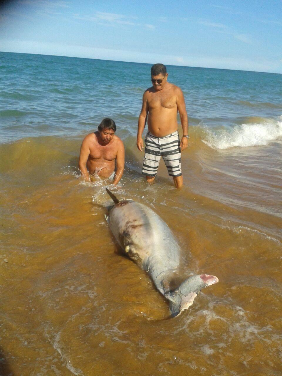 Golfinho é encontrado morto em praia do litoral de Aracruz | Folha ...