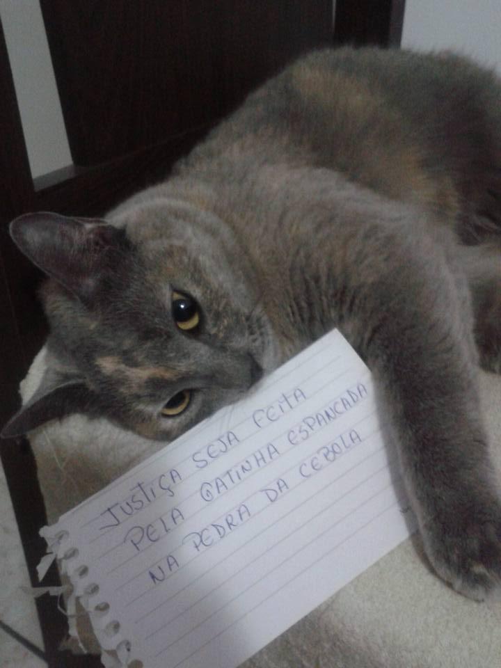 Morte de gata em bairro nobre de Vitória mobiliza defensores e ...