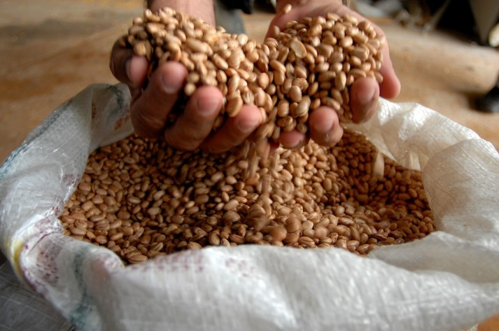 Clima já afeta feijão e preços disparam | Folha Vitória
