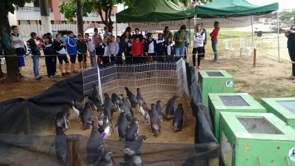 A praia de Itaipava, em Itapemirim, foi selecionada para a soltura dos 30 pinguins argentinos.