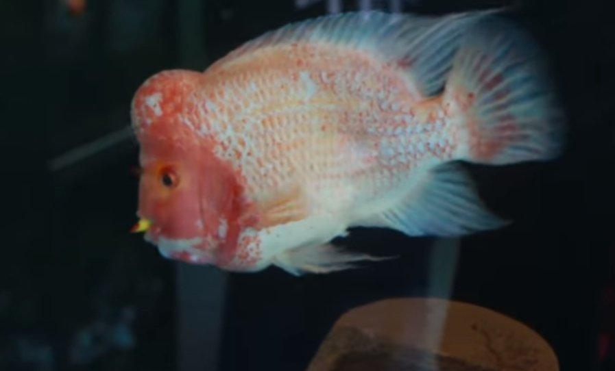 Shopping recebe exposição com mais de 50 espécies de peixes em ...
