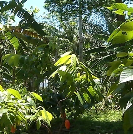 Plantas produtivas e árvores nativas convivem em harmonia na Fazenda Experimental