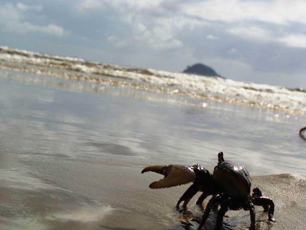 Comércio de caranguejo é liberado a partir desta terça-feira no ES ...