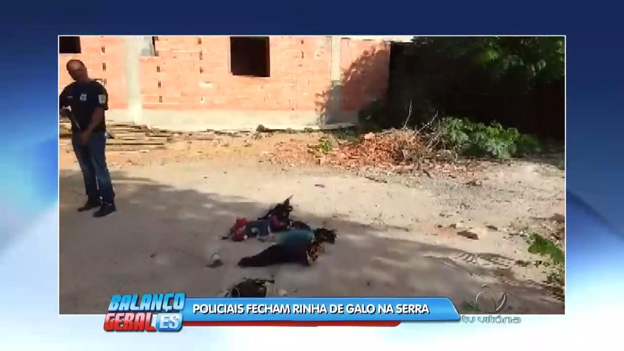 Apreensão: Policiais fecham rinha de galo na Serra | Folha Vitória