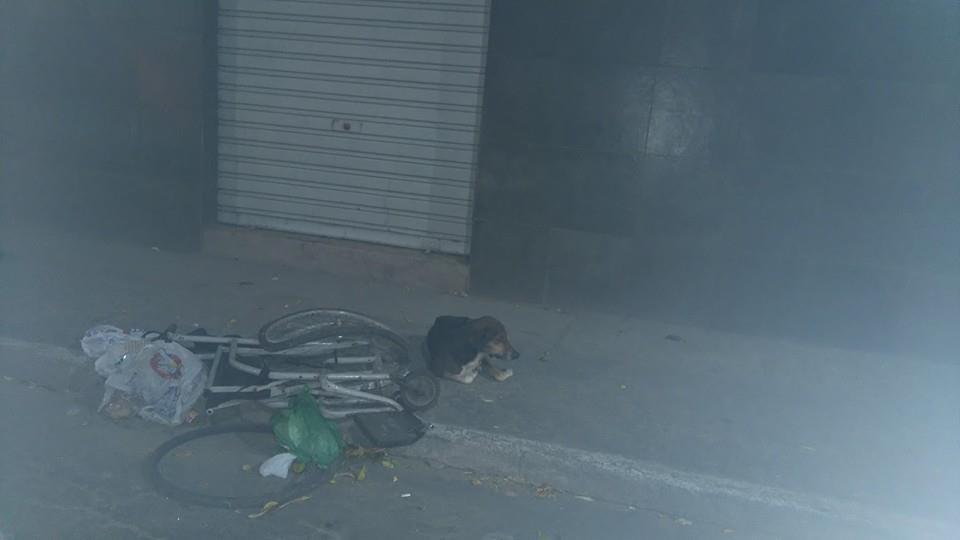 Após atropelamento, cadela passa a noite ao lado de cadeira de ...