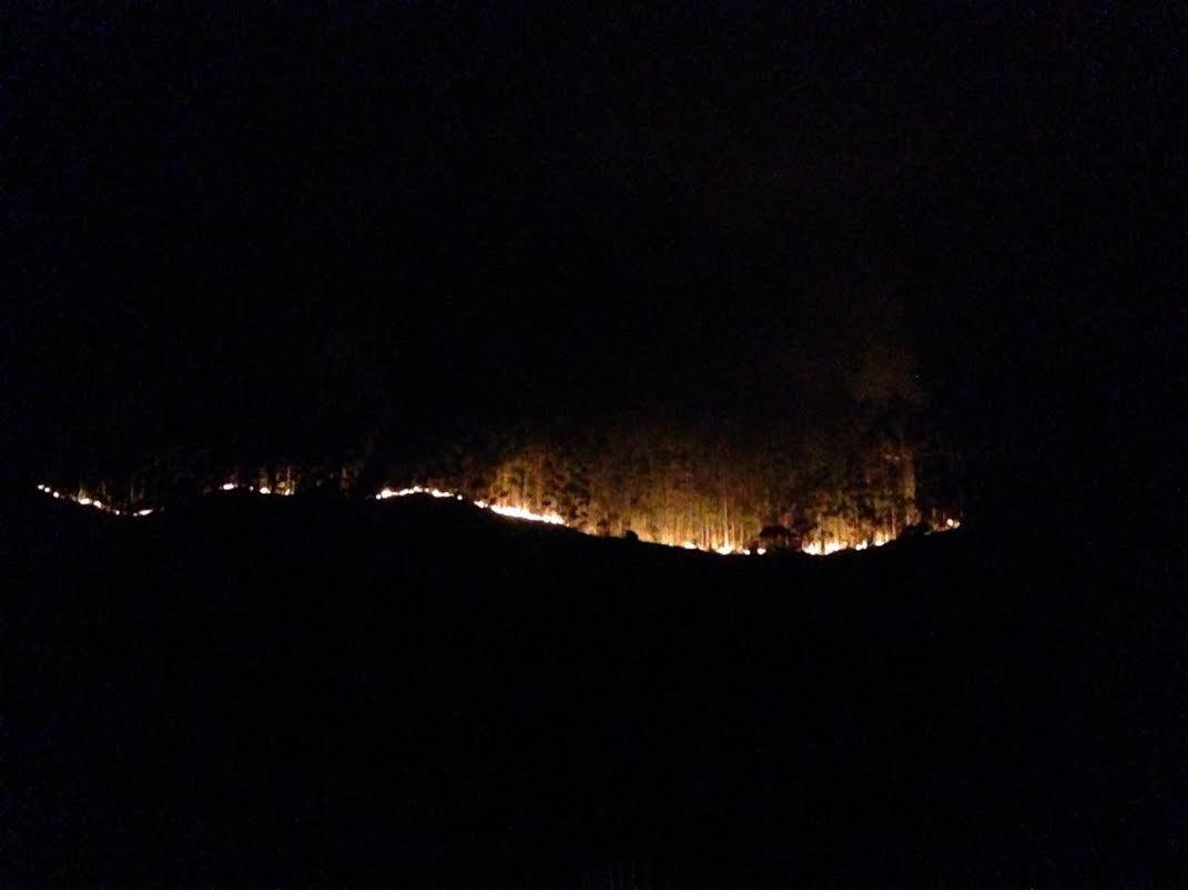 Causa de incêndio em plantação de Pedra Azul ainda não foi ...