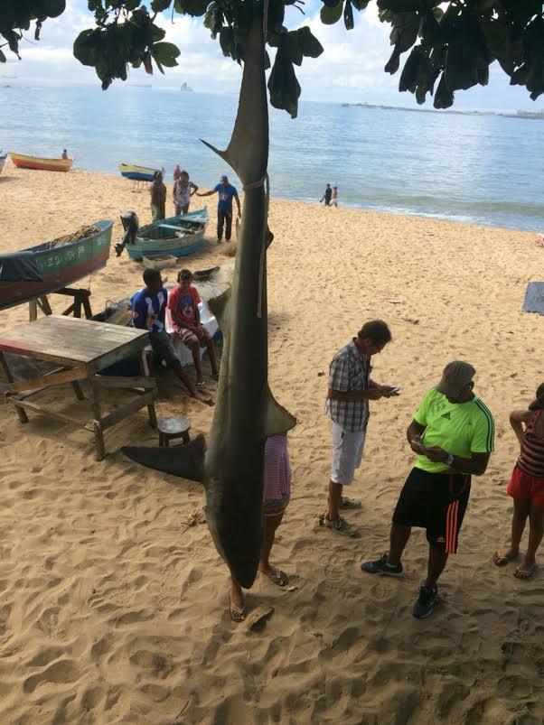 Tubarão é encontrado na praia de Itaparica em Vila Velha | Folha ...