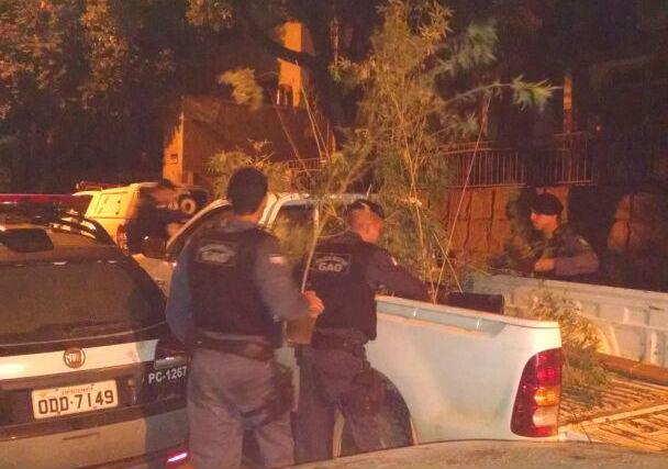 Médico e dentista são detidos com plantação de maconha dentro de ...