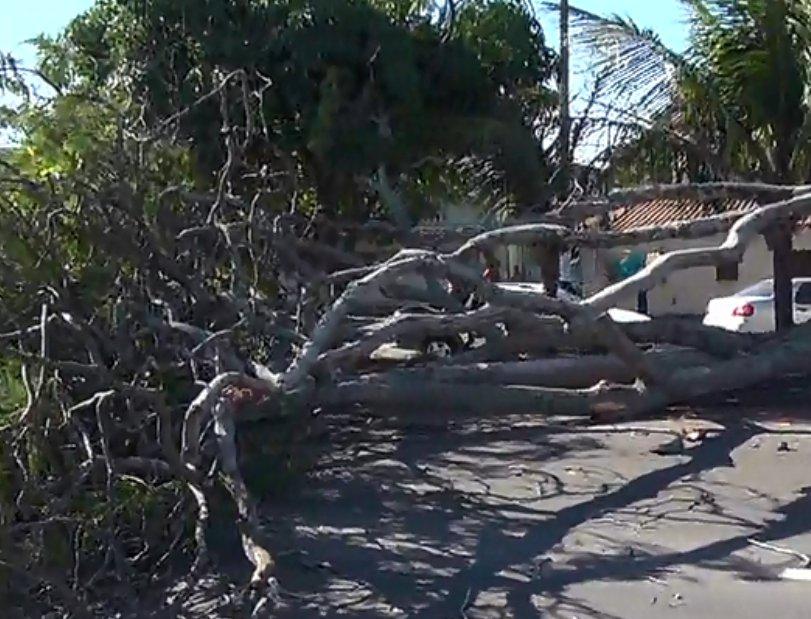 Queda de árvore assusta moradores e interrompe o trânsito na ...
