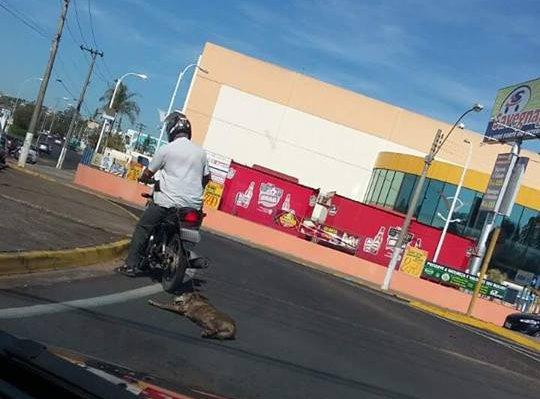 Cão é flagrado sendo arrastado por moto no interior de São Paulo ...
