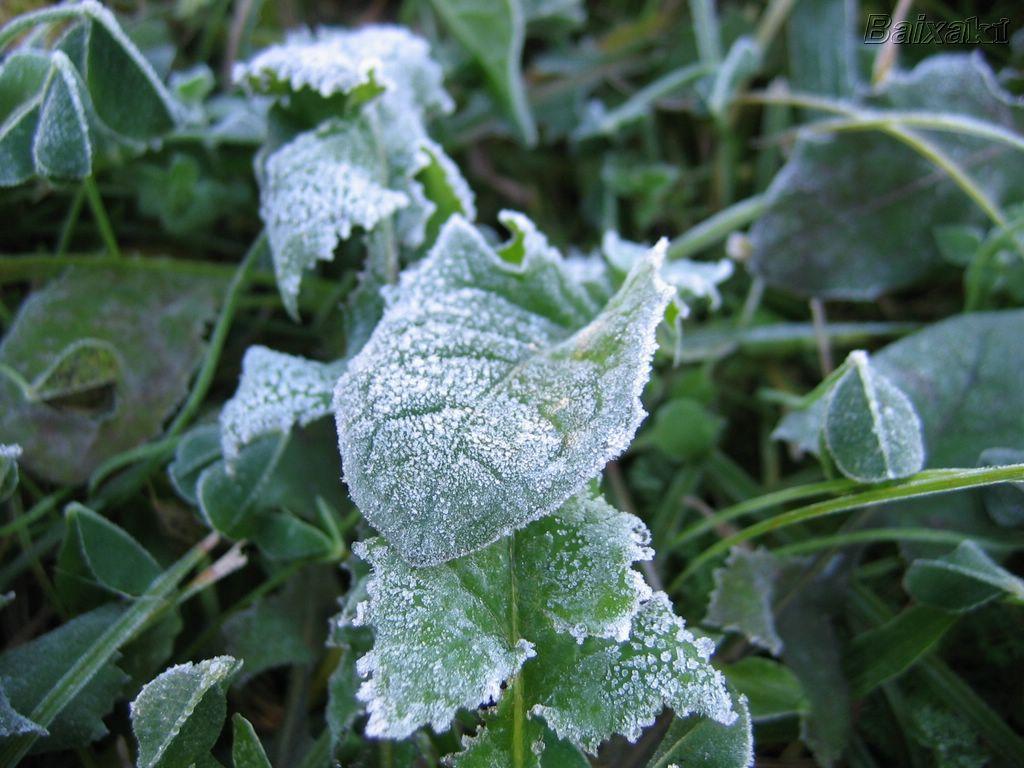 Frio pode aumentar e há previsão de geada na região Serrana do ES