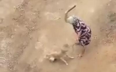 Idosa que espancou cachorro em Cachoeiro de Itapemirim será ...