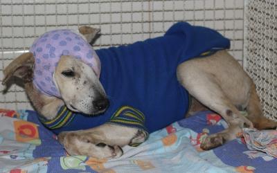 Saem resultados dos exames de cachorro espancado por idosa em ...