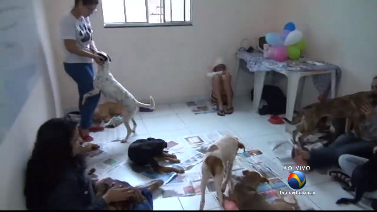 ES Solidário: veterinário explica detalhes sobre adoções | Folha ...