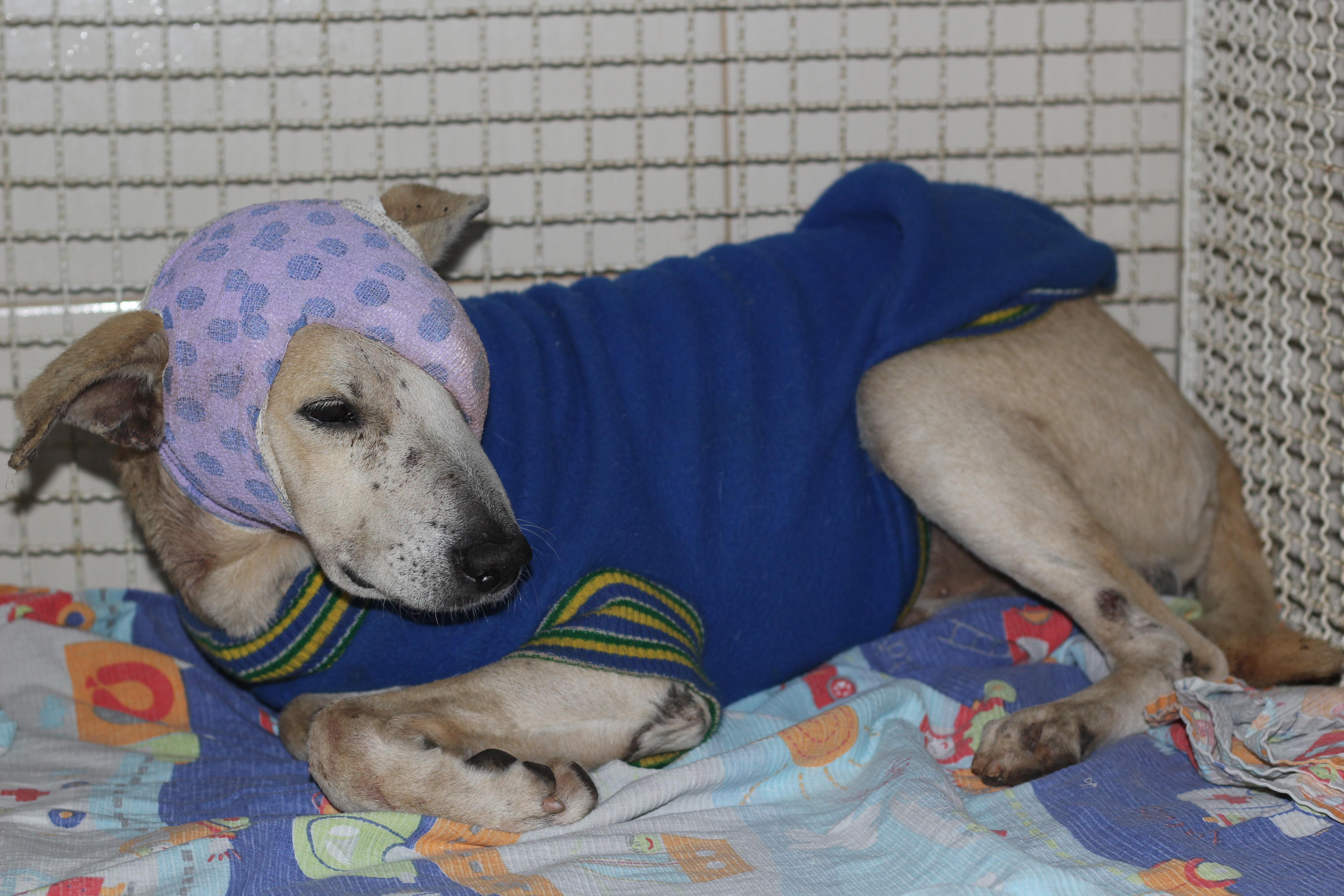 Cachorro agredido por idosa em Cachoeiro tem traumatismo ...