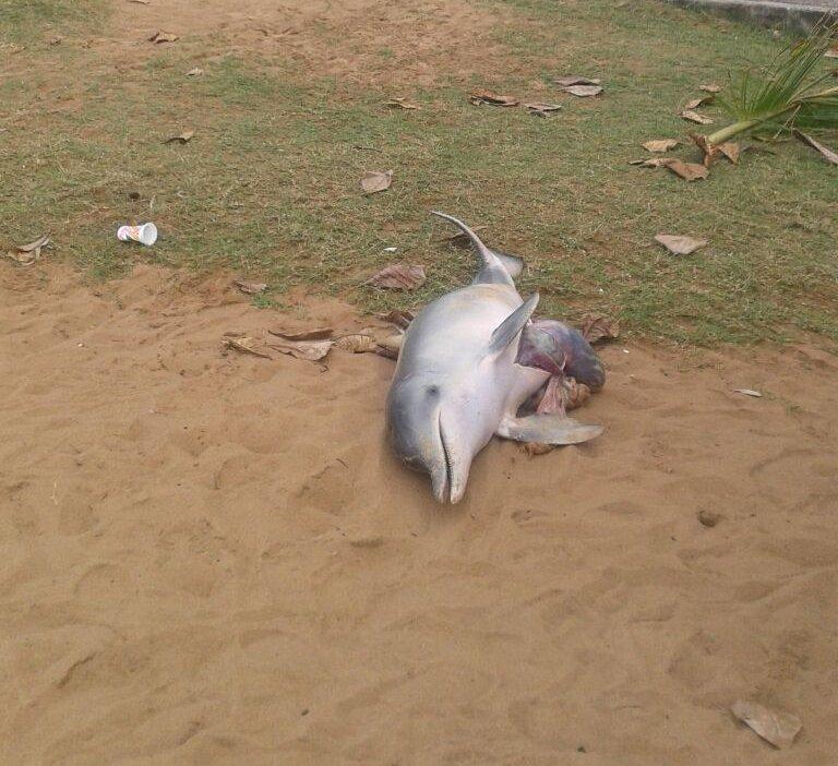 Golfinho é encontrado morto em areia da Praia da Costa, em Vila ...