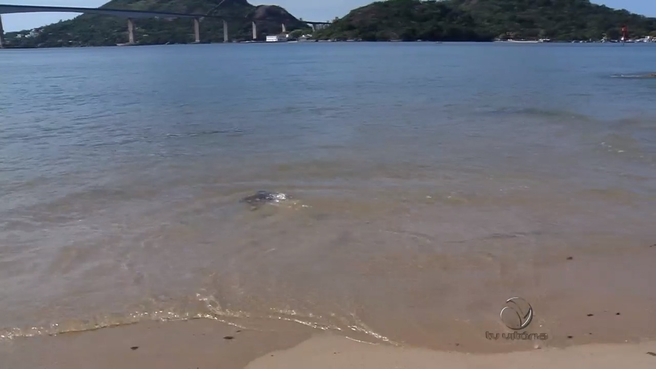 Após cuidados, tartaruga volta ao mar | Folha Vitória