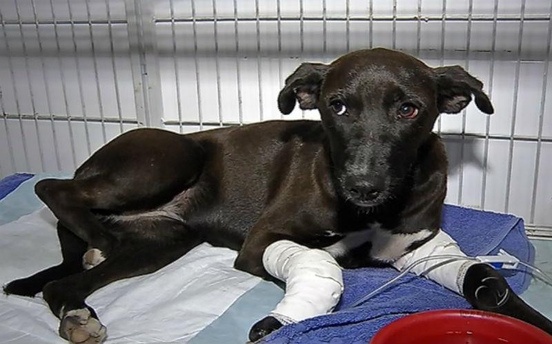 Atropelamento de cadela em Vitória causa revolta nas redes sociais ...