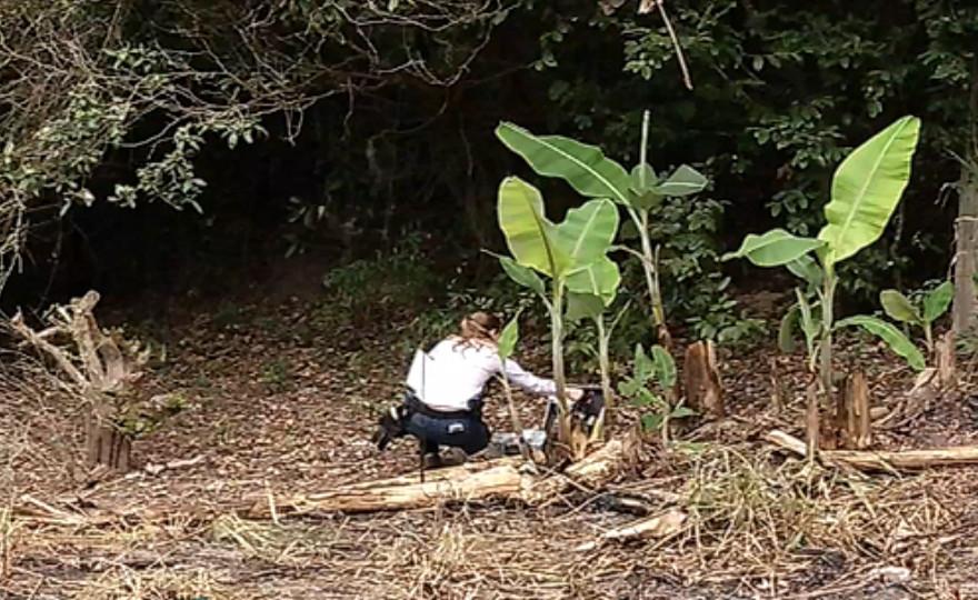 Cachorro encontra corpo de homem nos fundos de chácara na Serra