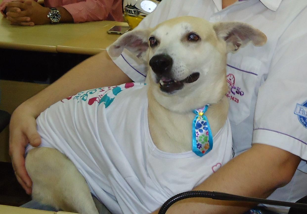 Cachorro agredido por idosa em Cachoeiro receberá alta nesta ...