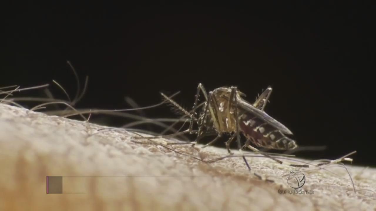Período chuvoso aumenta criadouros de Aedes aegypti | Folha Vitória