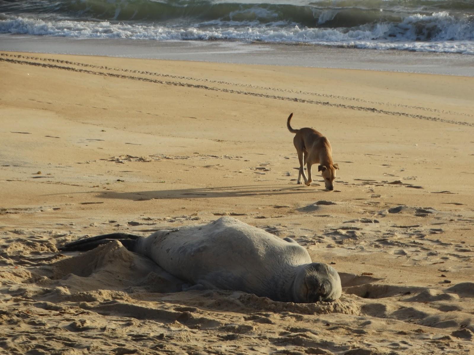 Fred em praia deserta de São Mateus