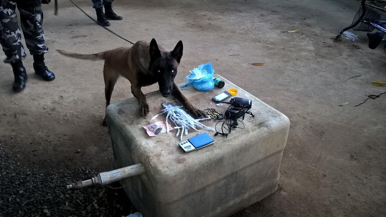No local, alvo dos mandados de busca e apreensão, os policiais encontraram drogas, arma e munição de diversos calibres